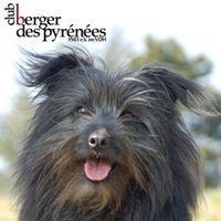 Club Berger des Pyrénées e.V.