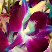 Orchid Imports Perth