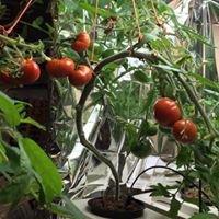 Extended Seasons Indoor Gardening