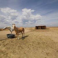 Front Range Hobby Farms