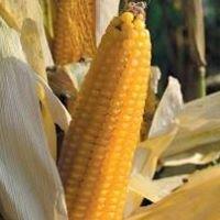 La Blave di Mortean Società Cooperativa Agricola