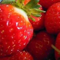 Lilliput i Piccoli Frutti della Terra
