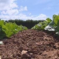 La Casa di Toni Azienda Agricola Biodinamica