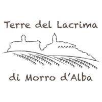 Morro d'Alba Experience