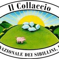Agriturismo - Camping Il Collaccio