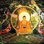 Bodhi Baby