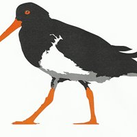 The Oystercatcher on Duporth