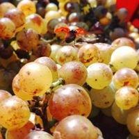Agriturismo e Vini La Vrille