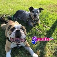 Mutts-HQ  DayCare & Boarding