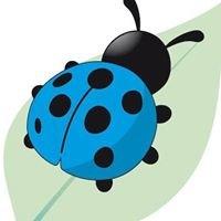 La coccinella blu