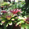 Horticultural Society of The Bahamas