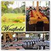 Westfield Golf Club