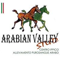Centro Ippico - Arabian Valley Stud - arabian horses