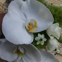 Taikayön kukka
