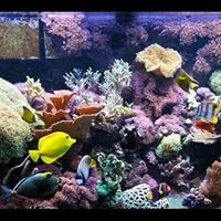 Reef Lovers Aquariums Inc.