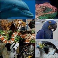 Museo della Fauna - Wildlife Museum - UNIME