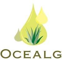Ocealg  - Les algues alimentaires de Bretagne
