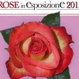 Rose in Esposizione • San Biagio Della Cima