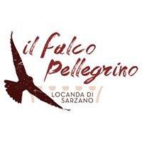 Il Falco Pellegrino - Sarzano