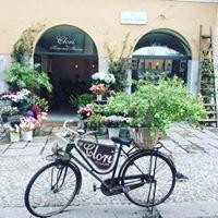 Clori Milano Home and Flowers