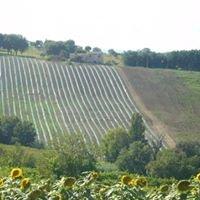 Azienda Agricola Borgo Felice