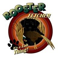 Rooster Fetcher Labradors