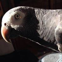 Avian & Exotic Veterinary Housecall Service, PLLC