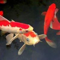 Eddies Aquarium Fan Page