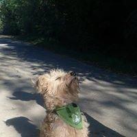Kutyatár Természet- és Állatvédő Egyesület Kaposvár