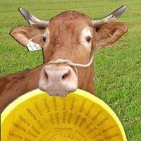 Azienda Agricola e Parmigiano Vacche Rosse Baiocchi
