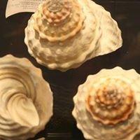 Museo della Conchiglia e del Corallo