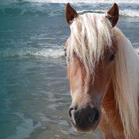 Le Pony Express du Cotentin - 50