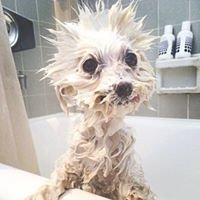Il cucciolo veterinario a domicilio Novara