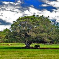 Kawailoa Ranch