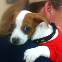 Mayflower Animal Clinic