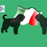 Club Italiano Bovaro delle Fiandre