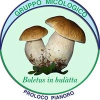 Gruppo Micologico Boletus in bulàtta - Pianoro