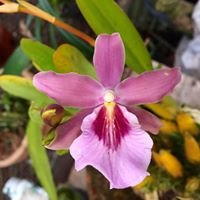 Vivero Anita, Orquídeas y Plantas Ornamentales
