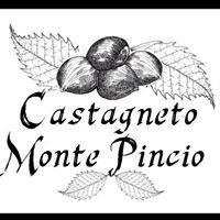 Castagneto Monte Pincio