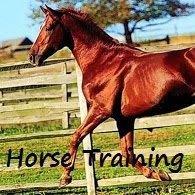 Mobil Horse Training & Problempferde Nicole Henk
