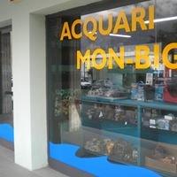MonBig Acquari Pian Camuno
