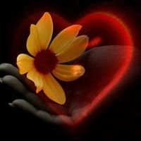 Флор-Амор цветы со всего Мира