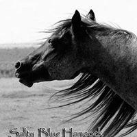 MA Quarter Horses