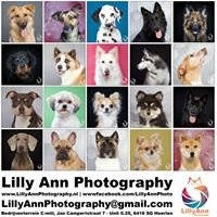 Lilly Ann Photography
