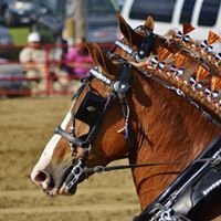 Britt Draft Horse Show