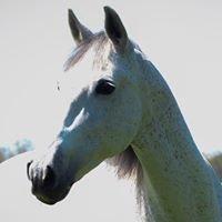 Ohio Equestrian Directory