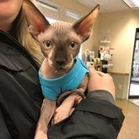 Piscataqua Animal Hospital & Pet Supply