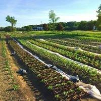 Deep Roots Farm NY