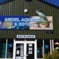 Angel Aquatics and Reptiles