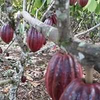 Natural Cacao Tour Don Memo